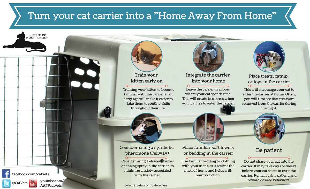Turn your cat carrier into a home away from home